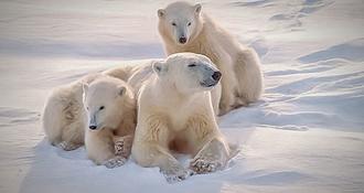 Animaux d'Alaska : la vie de la faune rythmée par le cycle des saisons
