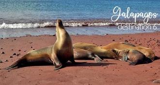 Destination n°6 : L'exubérante nature des îles Galápagos