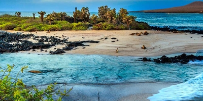 Croisière Galápagos : l'Archipel où la nature est maître