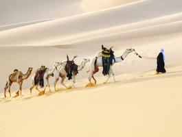 Caravane et chauffeur sur une grande dune du désert, Dubaï - Emirats arabes unis