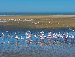 Walvis bay (Namibie)