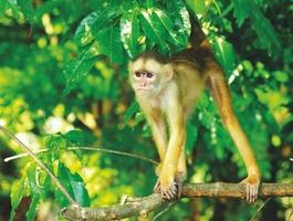 Faune d'Amazonie