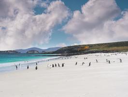 îles Falkland