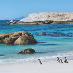 Boulders Beach - Le Cap (Afrique du Sud)