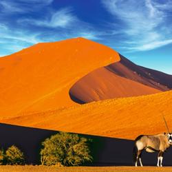 Désert du Namib (Namibie)