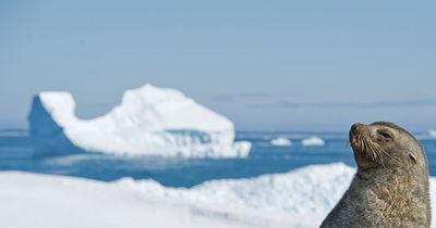 Faune du Grand Nord et Antarctique : les principaux animaux polaires