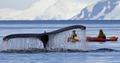 Kayak polaire en Antarctique, Spitzberg et Groenland
