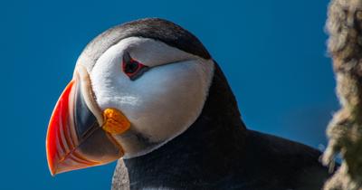 Ces animaux islandais que vous pourrez voir lors d'un voyage en Islande