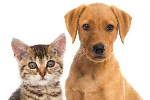 Chiens et chats en croisière : les animaux sont-ils bienvenus à bord ?