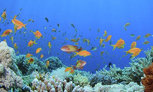 Écologie : le développement durable chez Costa en 10 mesures clés