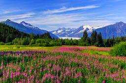 Quelle est la période idéale pour faire une croisière en Alaska ?