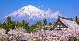 Cerisiers en fleurs au Japon : profitez du spectacle chaque année
