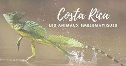 A la découverte des animaux emblématiques du Costa Rica
