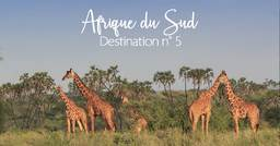 Destination n°5 : L'Afrique du Sud, sanctuaire sauvage