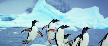 Embarquez pour la croisière Antarctique et vivez l'expérience d'une véritable navigation polaire avec une équipe francophone. Au départ d'Ushuaia, vous rejoindrez  le Continent Blanc où la nature règne en maître et irez au delà du Cercle polaire. Départ en mars 2022