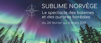 Cet hiver, partez pour un voyage inoubliable en Norvège à la recherche des plus beaux phénomènes naturels au monde : les aurores boréales et la migration des baleines.