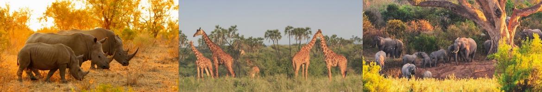 Parc Kruger et Johannesburg