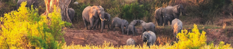 Pré-séjour (optionnel) : Parc Kruger et Johannesbourg (du 4 au 9 janvier 2022)