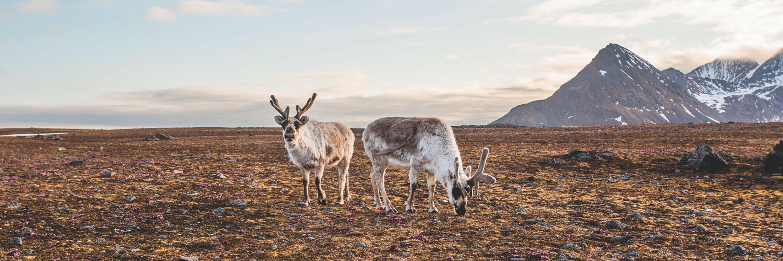 Photo d'animaux prise par Jean-Charles Thillays lors de l'un de ses voyages
