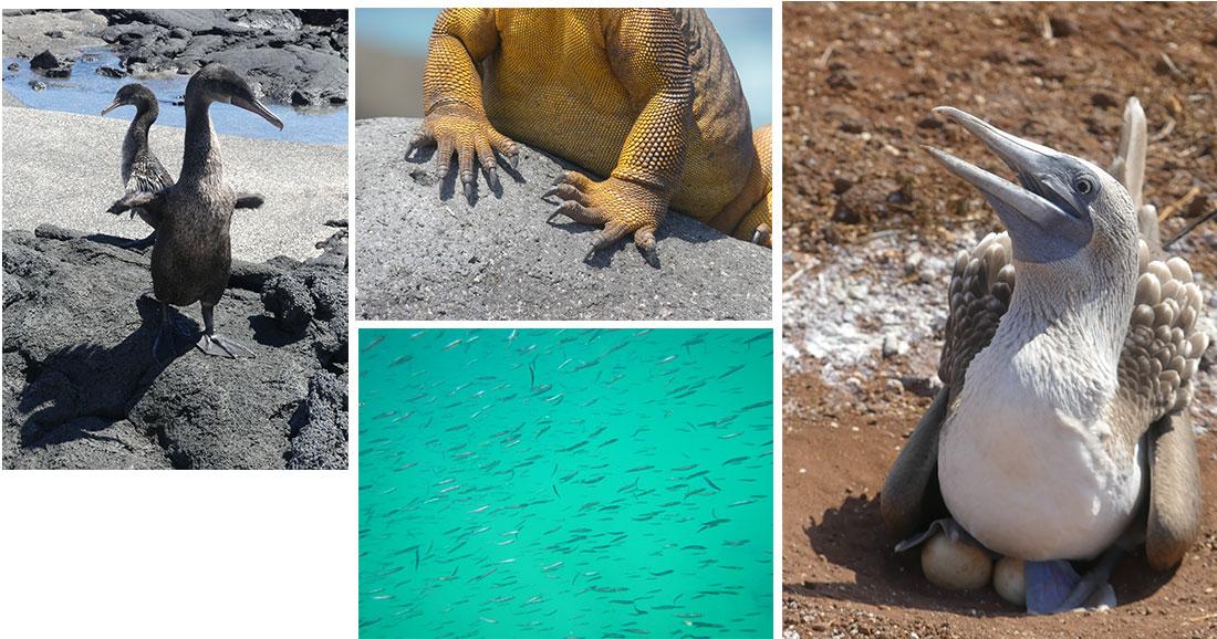 Les Îles Galapagos et sa faune vues par Marienne Duruel