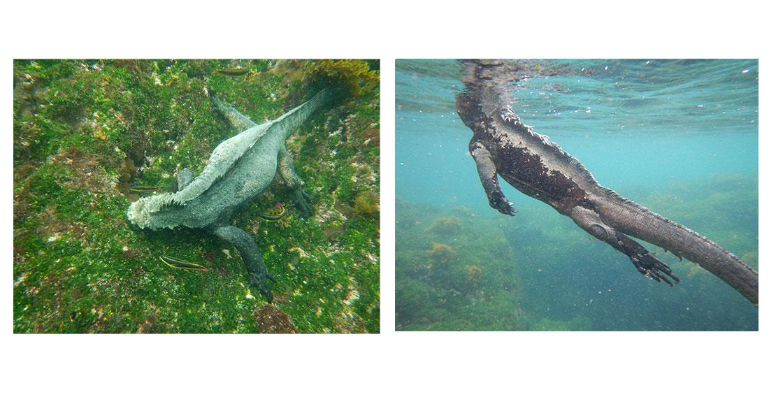 La faune des Galapagos dans l'objectif de Marianne Duruel