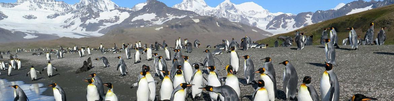 Île Antarctique et îles subantarctiques