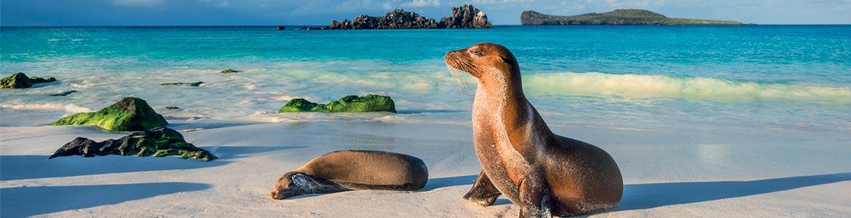 Galápagos, Darwin, Faune et Flore