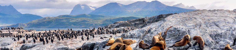 Votre croisière en Patagonie : les 10 temps forts de votre voyage