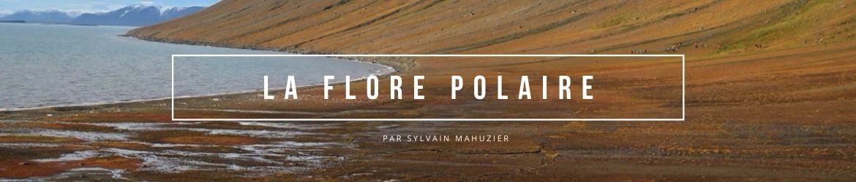 Flore polaire ou les incroyables stratégies de survie de la végétation
