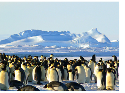 Colonies de manchots en antarctique